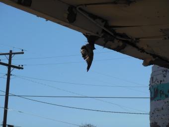 The Dead Bird. Holbrook, AZ, March 22, 2015.