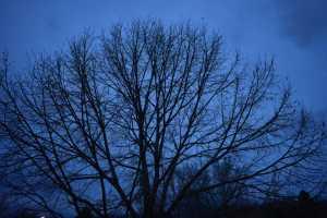 Branches (© F. P. Dorchak, December 10, 2016)