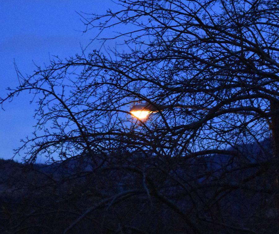 Light and Branches (© F. P. Dorchak, Dec 11, 2016)