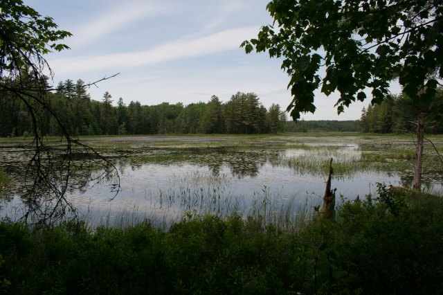 Heron Marsh, Paul Smith's VIC, New York (Image © F. P. Dorchak)