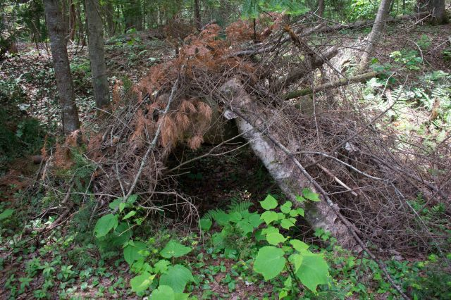 Marsh Trail Rustic Shelter. (Image © 2018 F. P. Dorchak)
