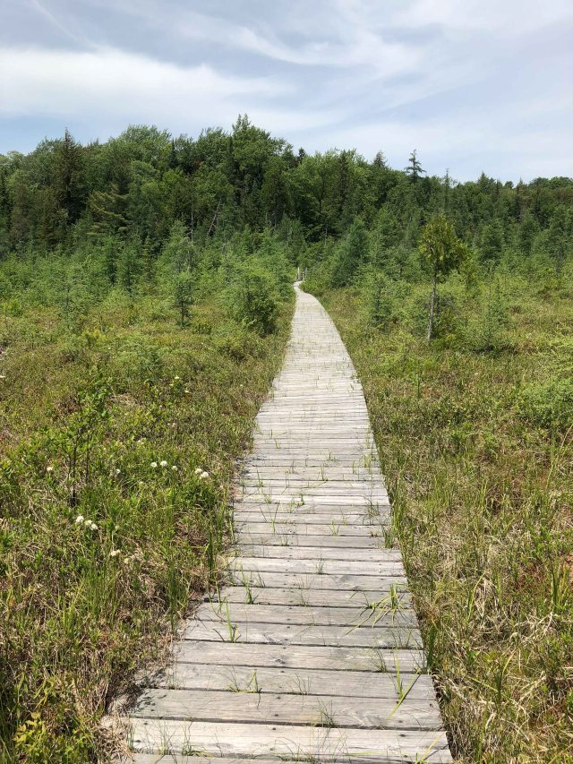 Heron Marsh Boardwalk The Other Way. (Image © 2018 F. P. Dorchak)