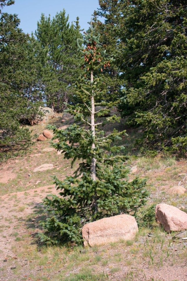 A Tree (© 2020 F. P. Dorchak)