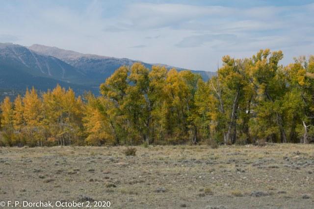 Buena Vista, Colorado (© F. P. Dorchak 2020)