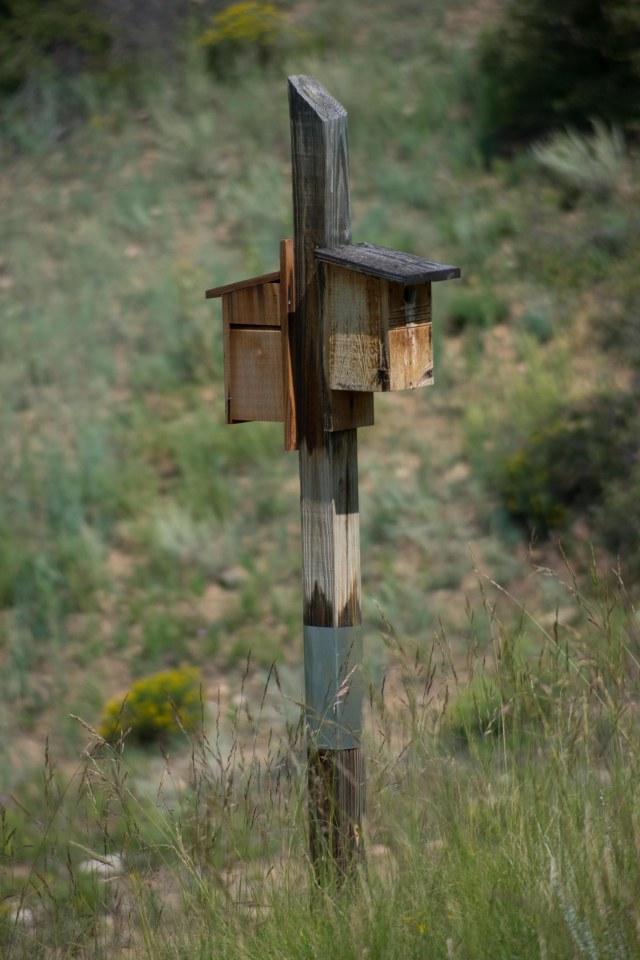 Wilkerson Pass, Colorado (Images © F. P. Dorchak August 12, 2021)